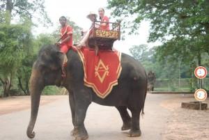 angkor wat elefants